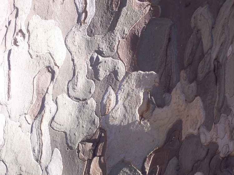 Bark:  Light to Dark
