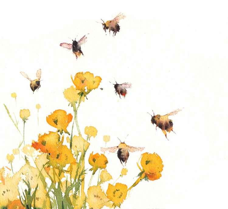 Buttercups and Bumblebees -