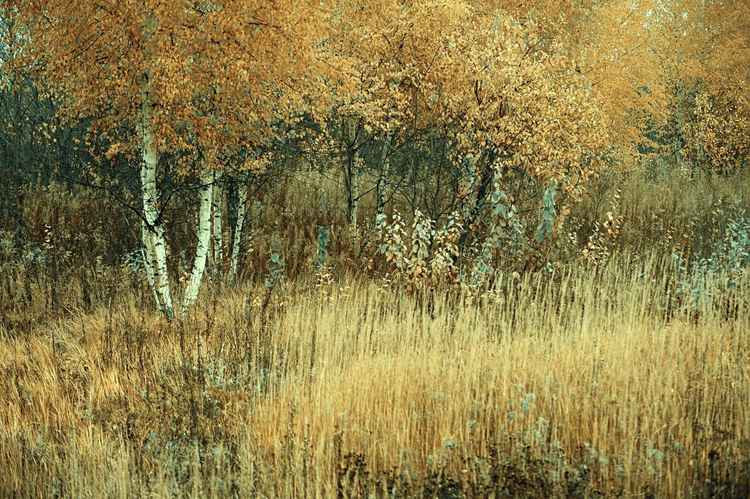 Merging Of Nature (LTD edition of only 25 fine art giclee prints from an original photograph)