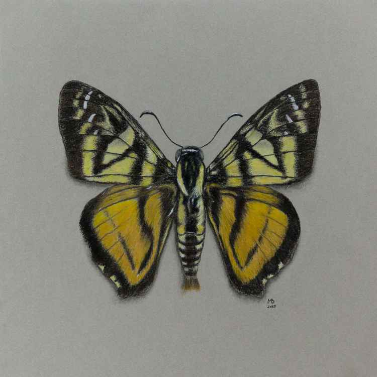 "Original pastel drawing ""Fire-banded Skipper"""