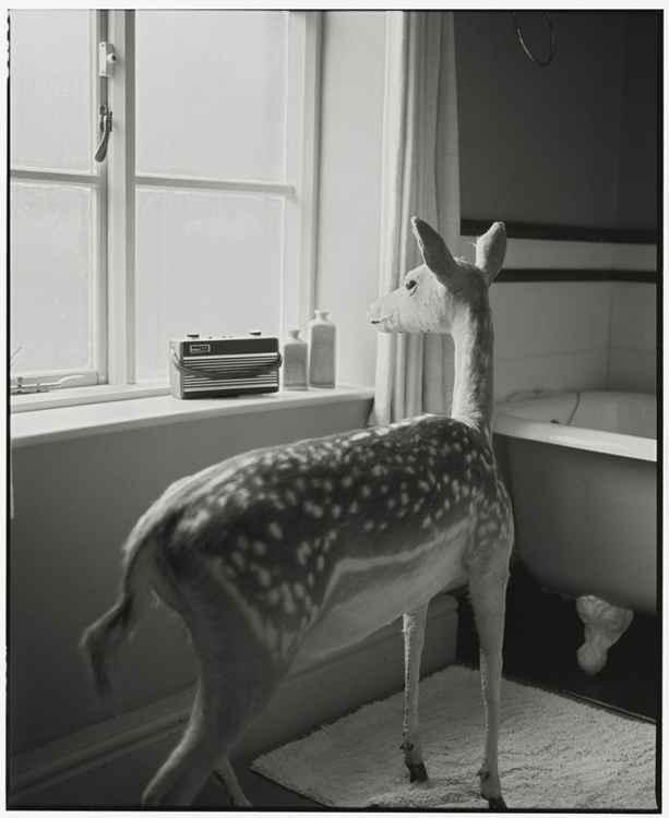 Deer in the Bathroom-2 (Medium size) -