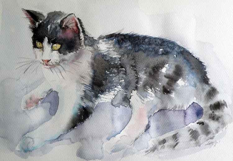 Cat II -