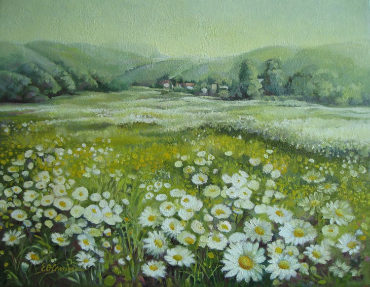 Field of daisies - Image 0