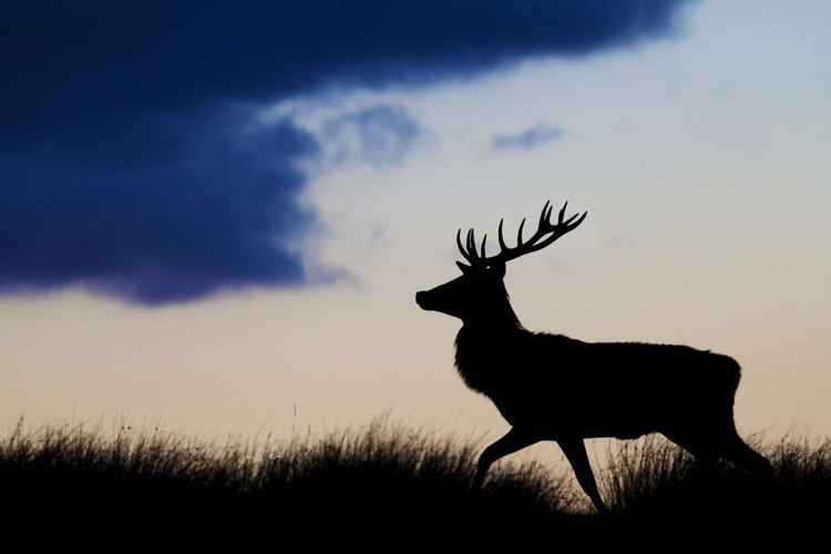 Deer walking on ridge of hill -