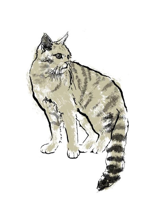 Gold Scottish Wildcat - Image 0