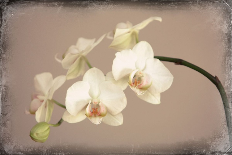 Orchid #1 - Image 0