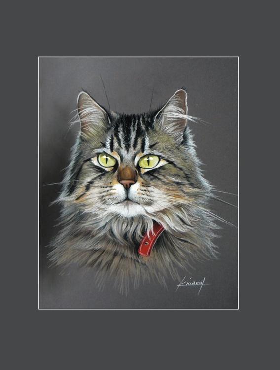 European angora cat - Image 0