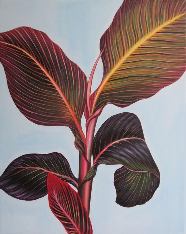 Canna Lily - Image 0