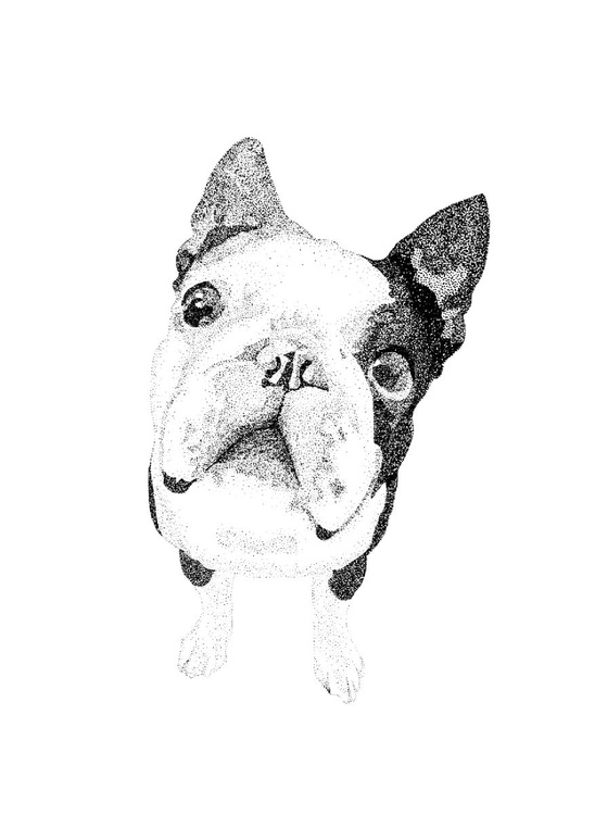 Boston Terrier Screen Print, Limited Edition - Image 0