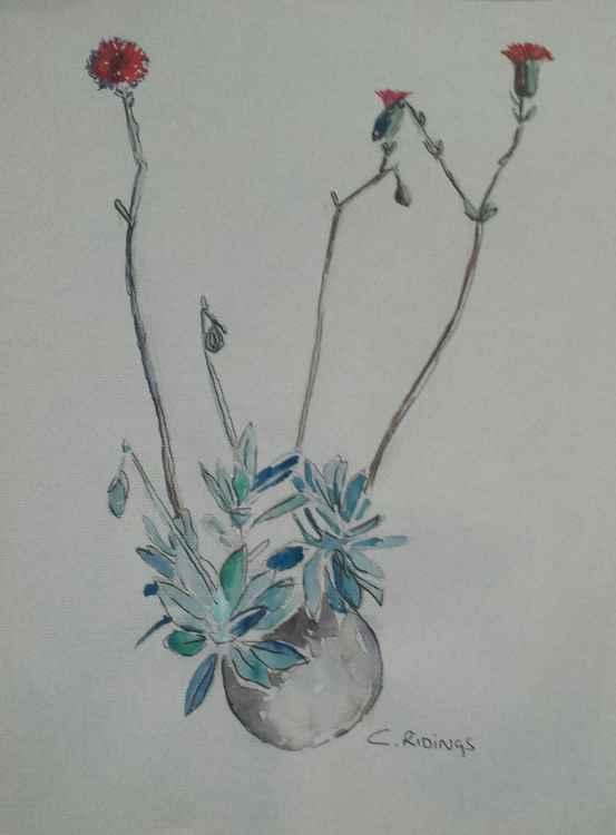 Floating plants -