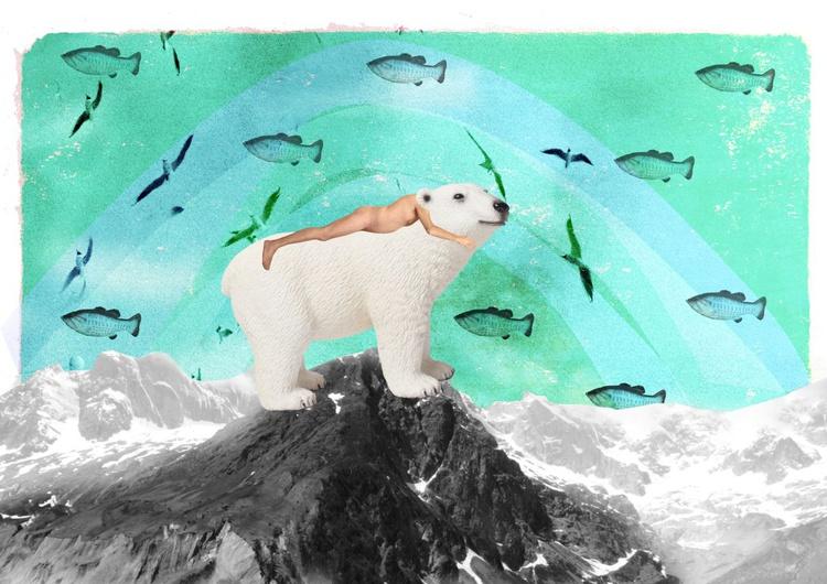 The bear - Image 0