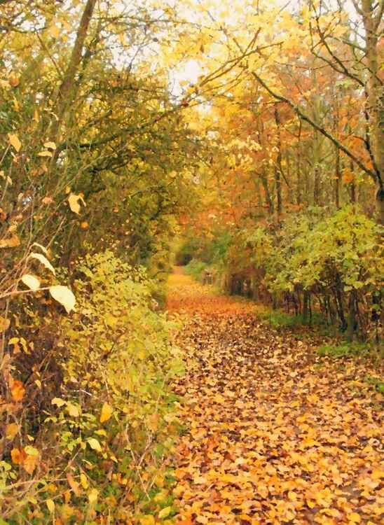 Autumn on the Railway Footpath -