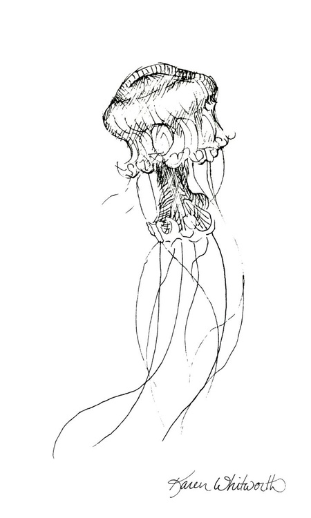 Jellyfish Black and White Gesture Drawing - Image 0