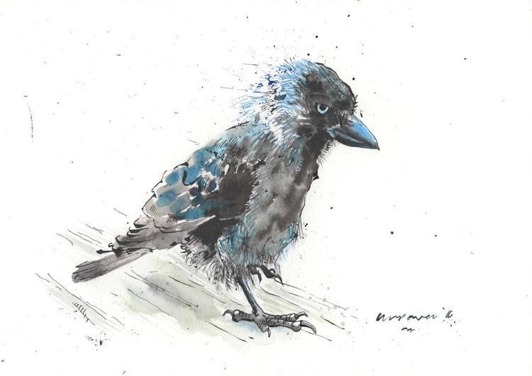 Jackdaw Plotting - Daily Bird #55 - Image 0