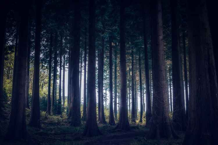 Deep dark woods -