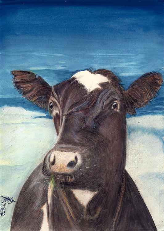 MOO COW -