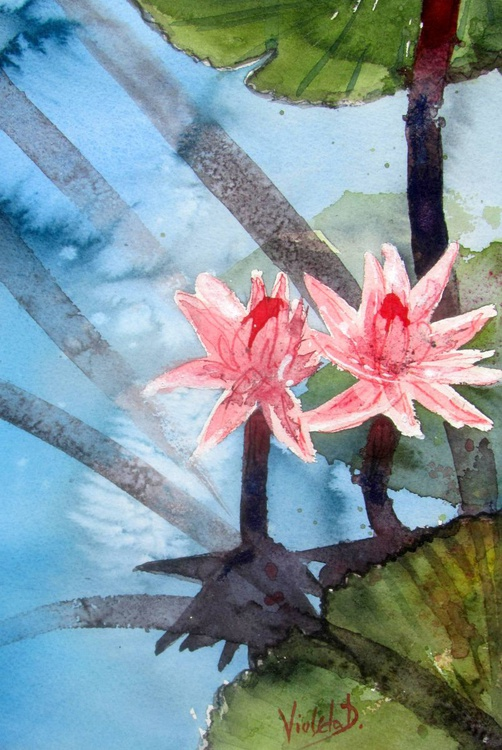 Waterlily 1 - Image 0
