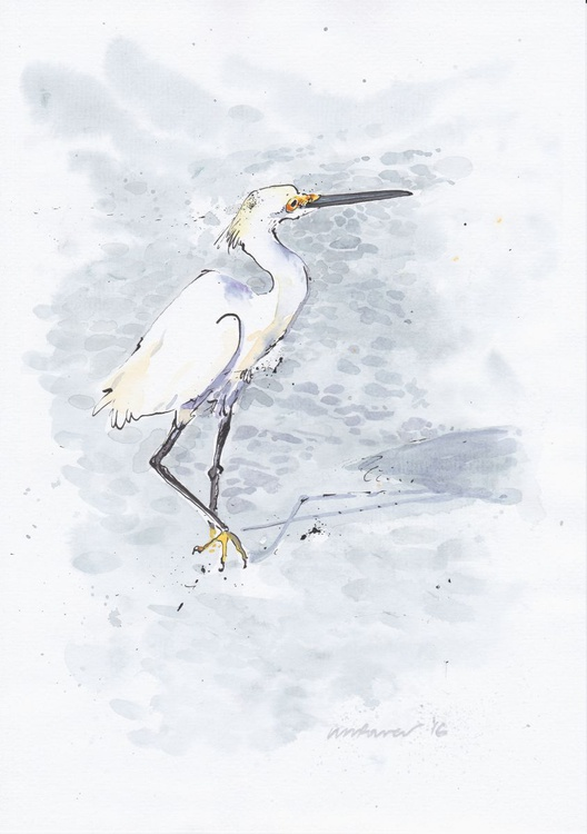 Snowy Egret- Daily Bird #04 - Image 0