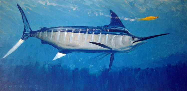 Blue Marlin - Going for Yellow