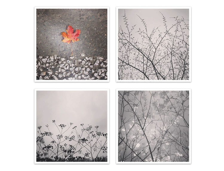 Flora - Image 0