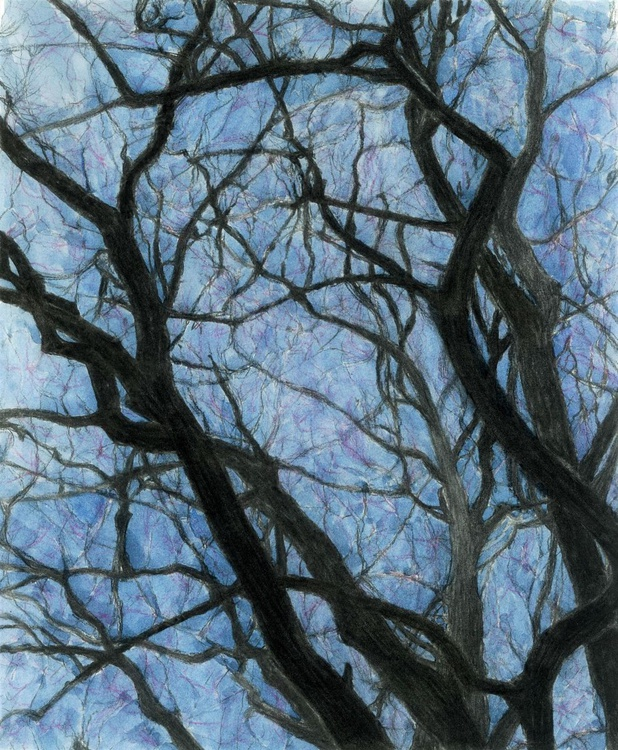 BETWEEN BRANCHES (Twilight) - Image 0