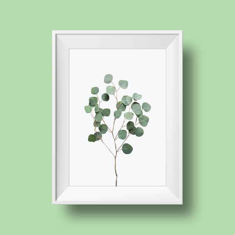Silver Dollar Eucalyptus -