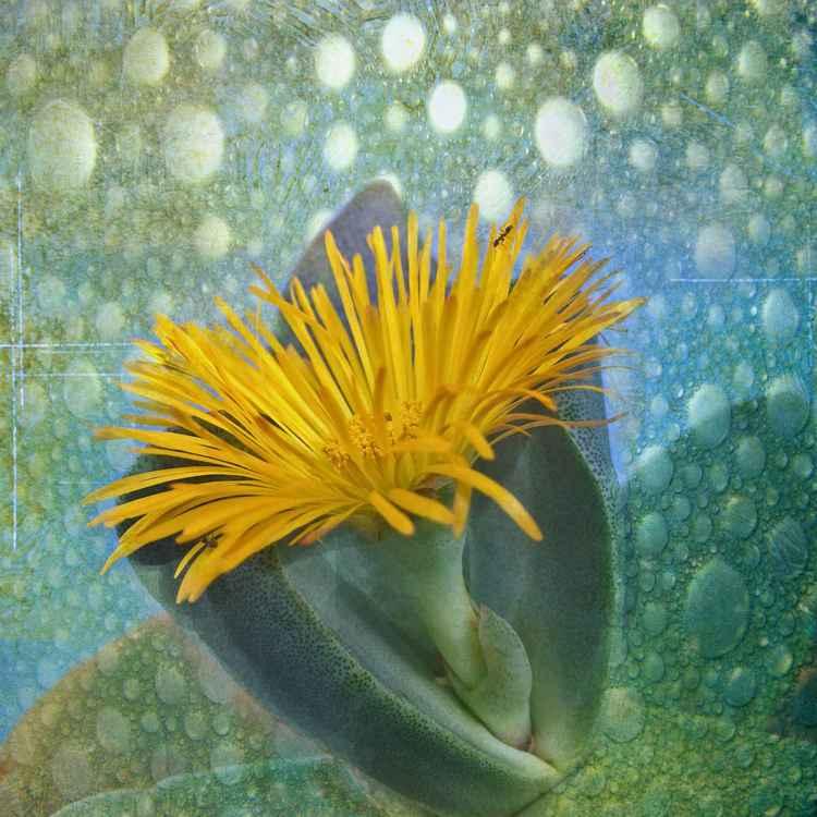 Split Rock Cactus -