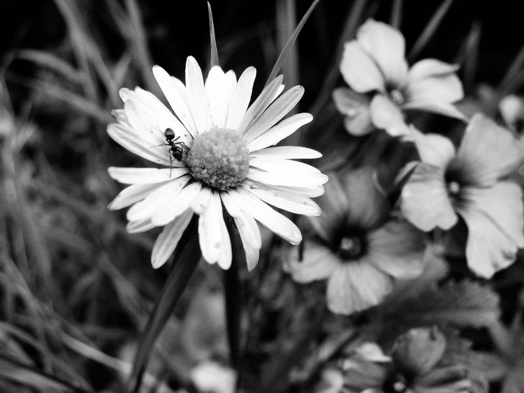 Summer in Black and White - Image 0