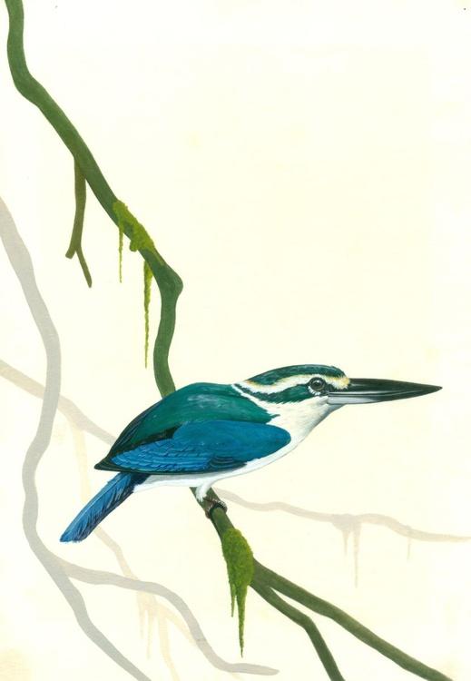 Mangrove Kingfisher - Image 0