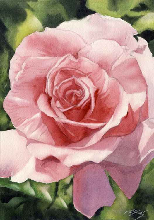 rose in pink -