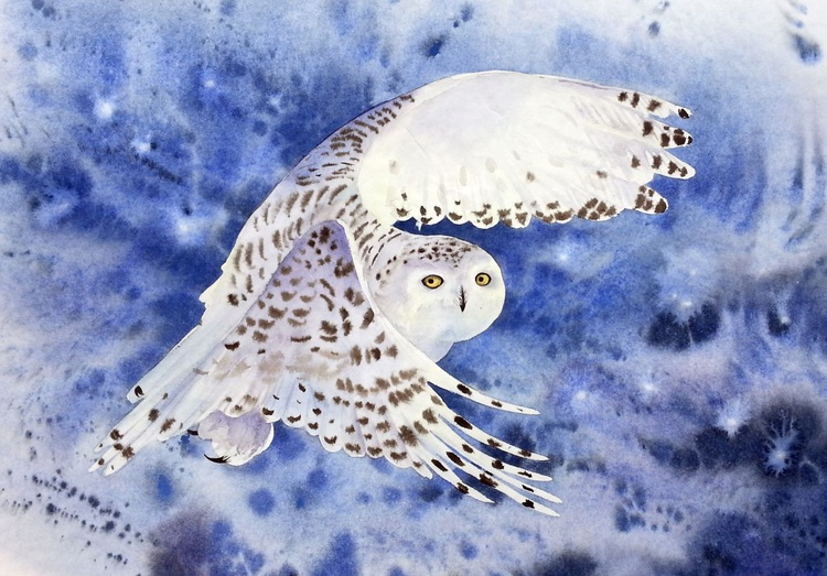 Snowy Owl at Dusk in a Snow Storm - Image 0