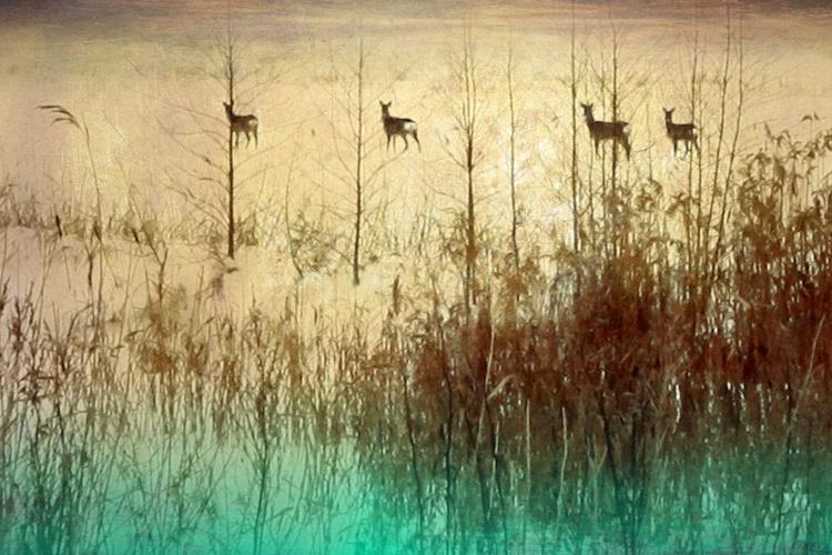 Grazing deer - Image 0