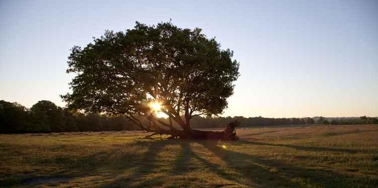 Defiant Tree -