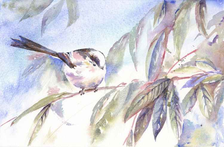 Long tailed tit -