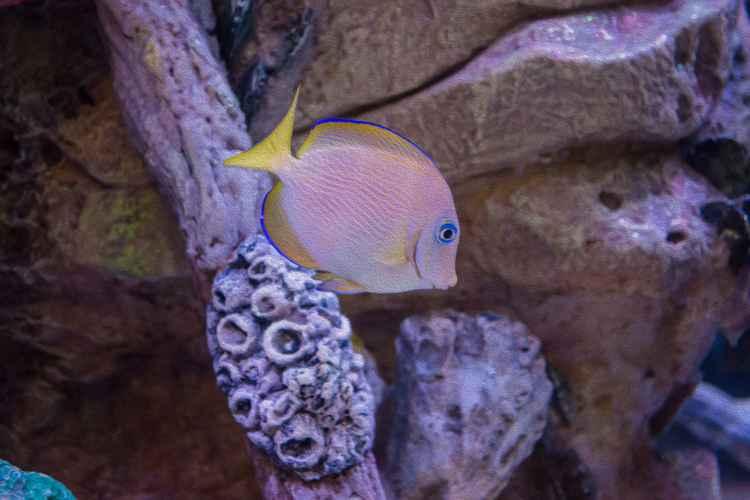 Aquarium Impression