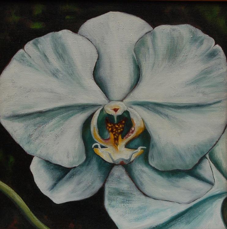 """Moth Orchid I"" - Image 0"