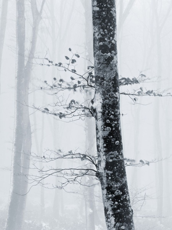 Cold winter - Image 0