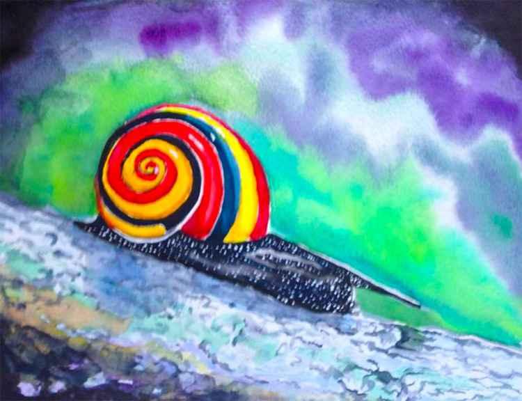 Belizean Snail