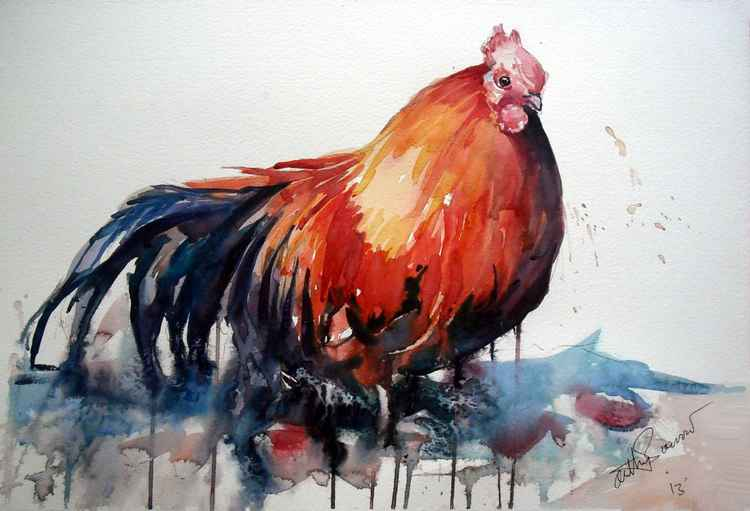 Cockerel -