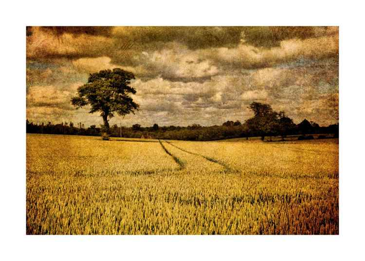 Trees & Crops -