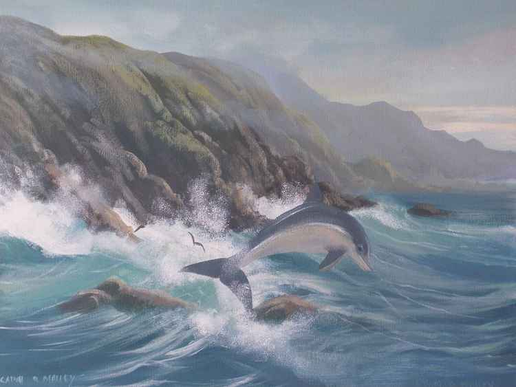 dolphin on the west coast -
