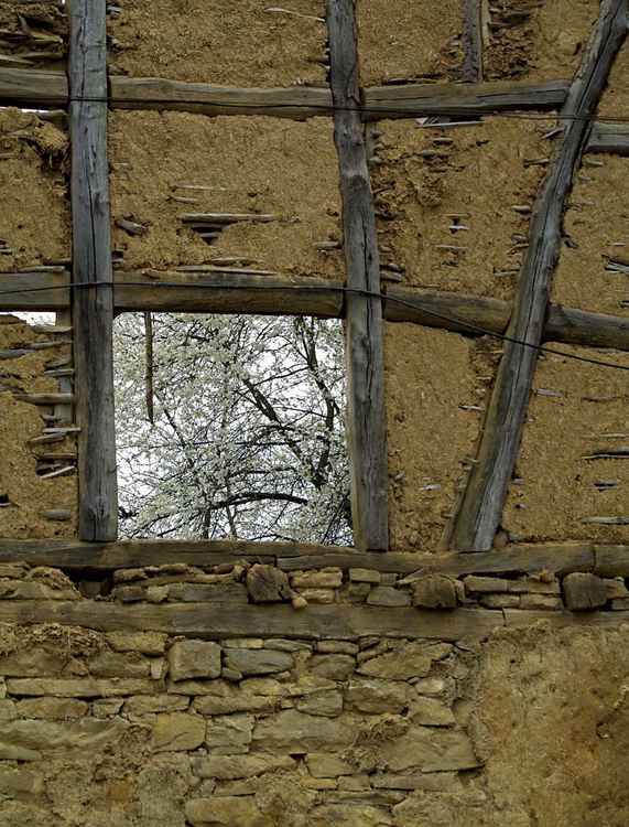 Spring (window 03) -
