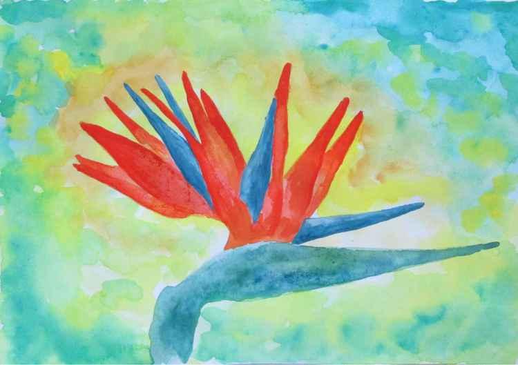 Paradise flower -