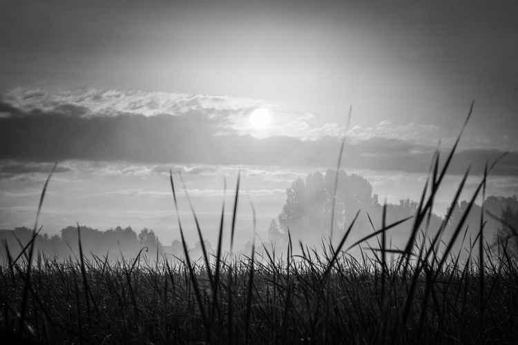 Landscape11 -