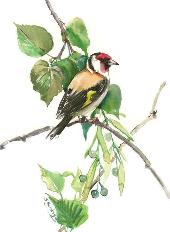 European Goldfinch And Linden -