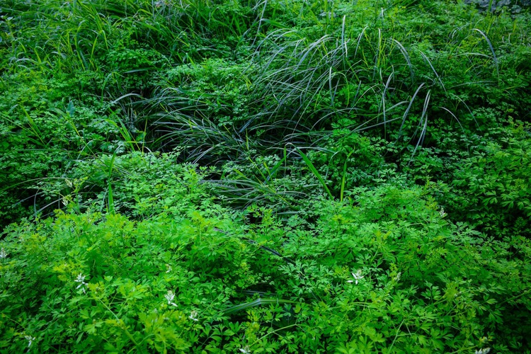 """""""Neglected/Natural Garden in the City"""" - Image 0"""