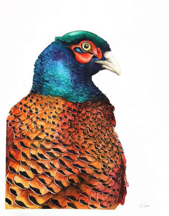 Pheasant, bird, birds, animals, wildlife watercolour painting