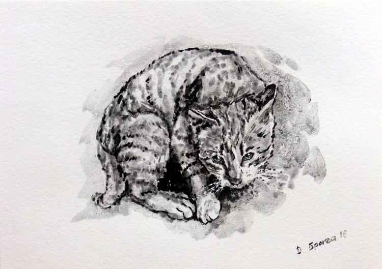 Cat 06 -