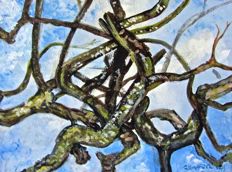 Lichen Covered Branches -