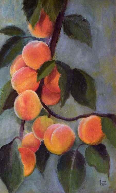 Apricots -